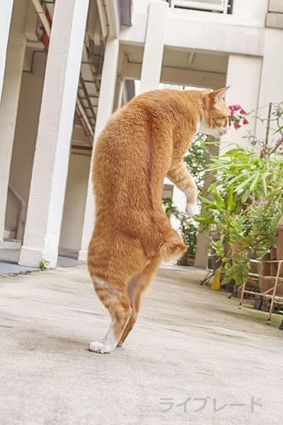 ご近所猫 2021.03.31_f0112152_20495013.jpg