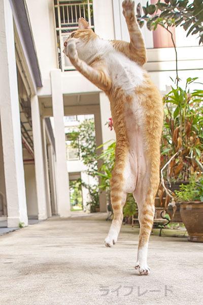 ご近所猫 2021.03.31_f0112152_20495947.jpg
