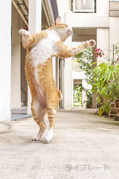 ご近所猫 2021.03.31_f0112152_20511533.jpg