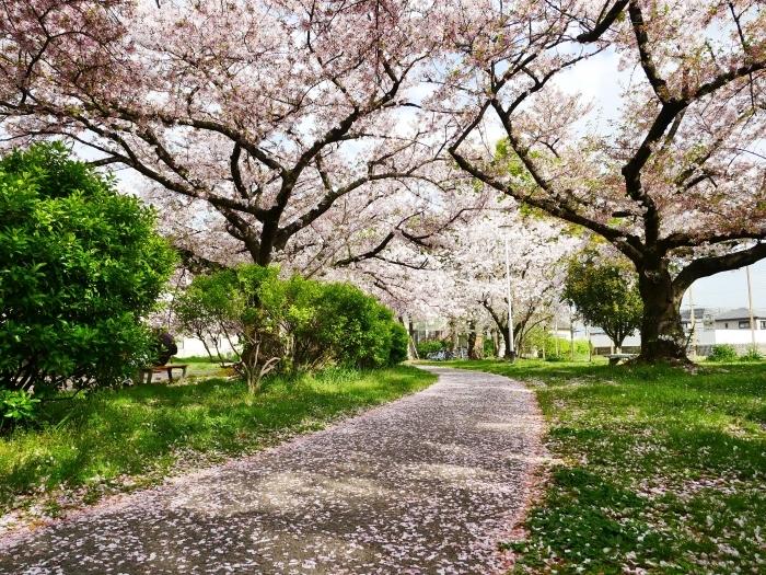 落花盛ん  2021-04-05 00:00_b0093754_22475369.jpg