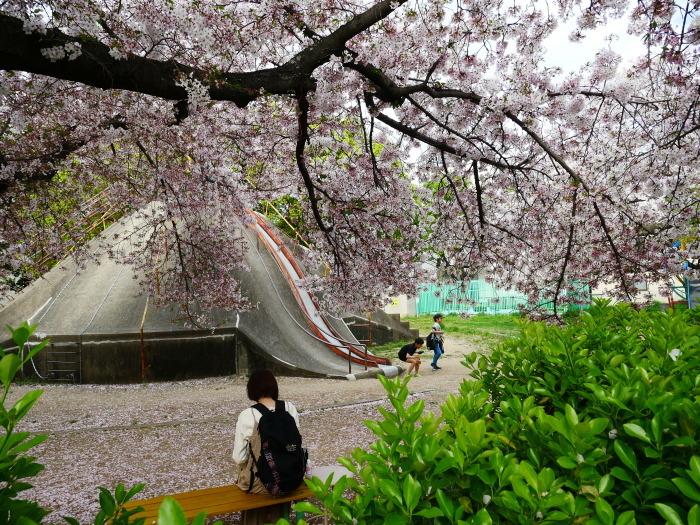 落花盛ん  2021-04-05 00:00_b0093754_22480473.jpg