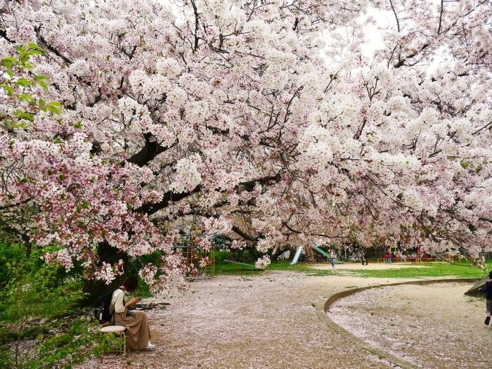 落花盛ん  2021-04-05 00:00_b0093754_22483813.jpg