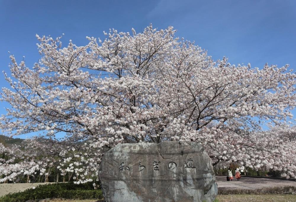 2021・桜 <和らぎの道 桜公園>_a0119263_17084480.jpg