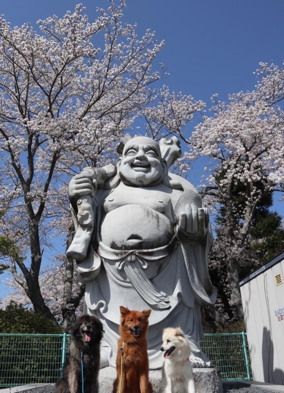 2021・桜 <和らぎの道 桜公園>_a0119263_17084558.jpg