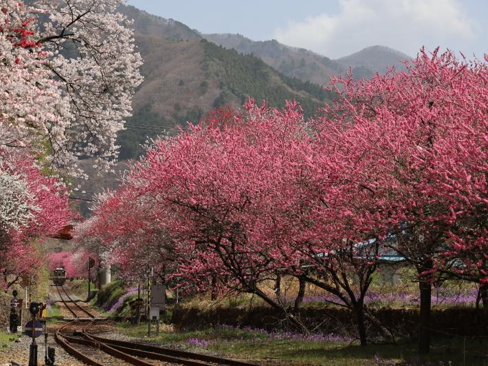 わ鉄神戸駅は花ざかり(2) (2021/3/31撮影)_b0369971_15315723.jpg