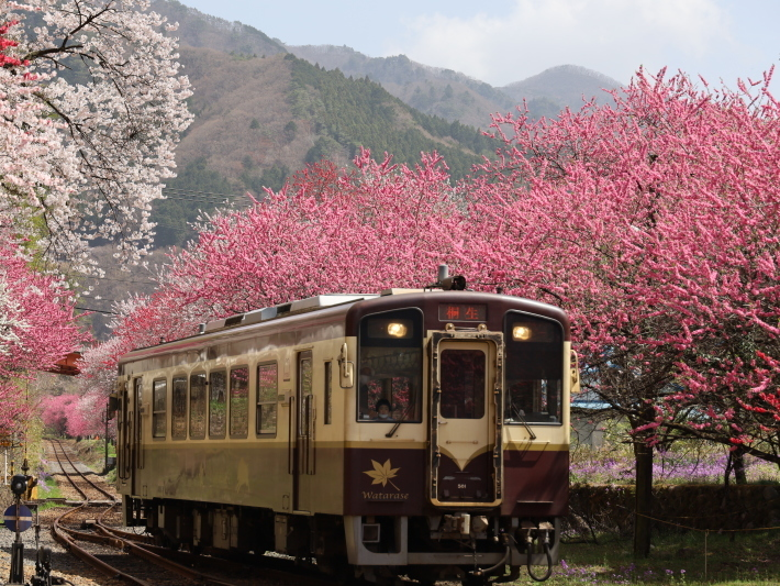 わ鉄神戸駅は花ざかり(2) (2021/3/31撮影)_b0369971_15331782.jpg