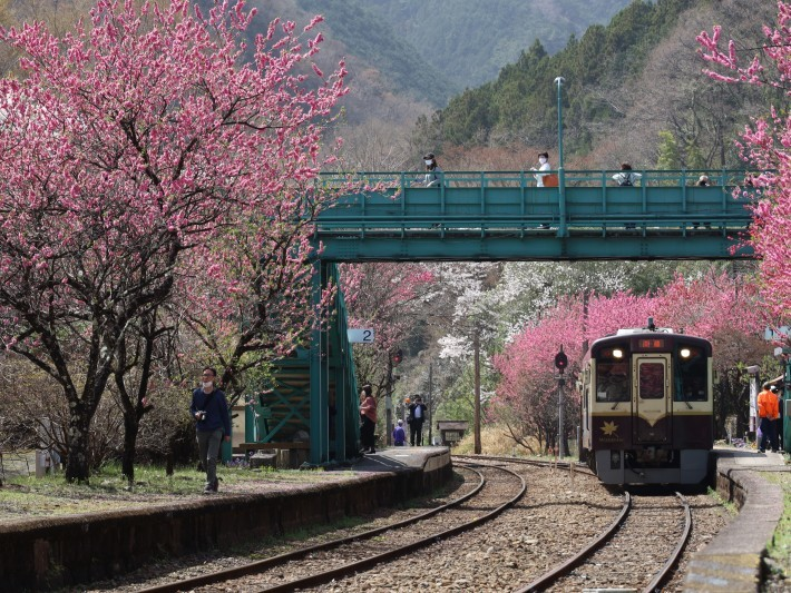 わ鉄神戸駅は花ざかり(2) (2021/3/31撮影)_b0369971_15481683.jpg