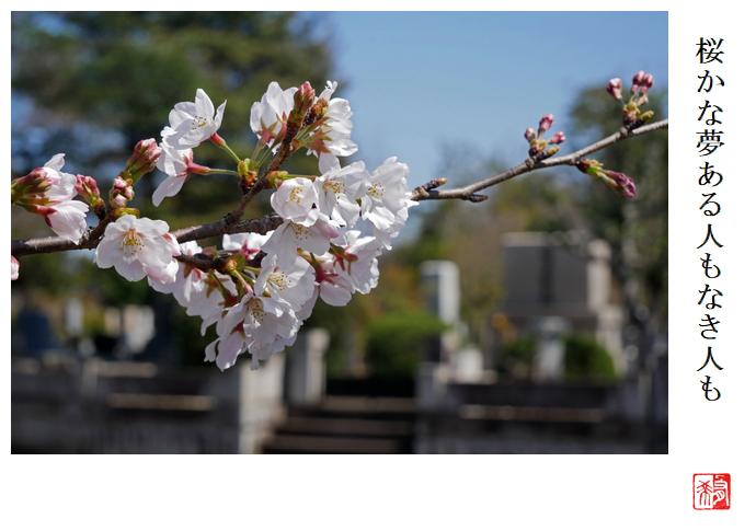桜かな夢ある人もなき人も_a0248481_21261124.jpg