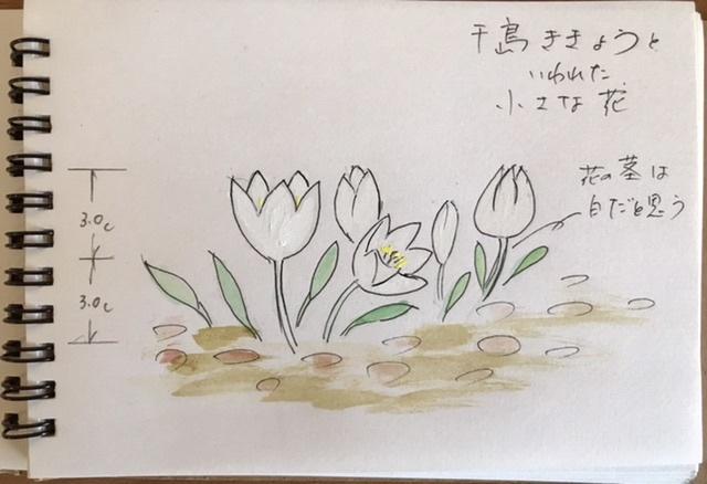 続・この花の名前は??銀杯草でした。_e0397389_18493072.jpeg