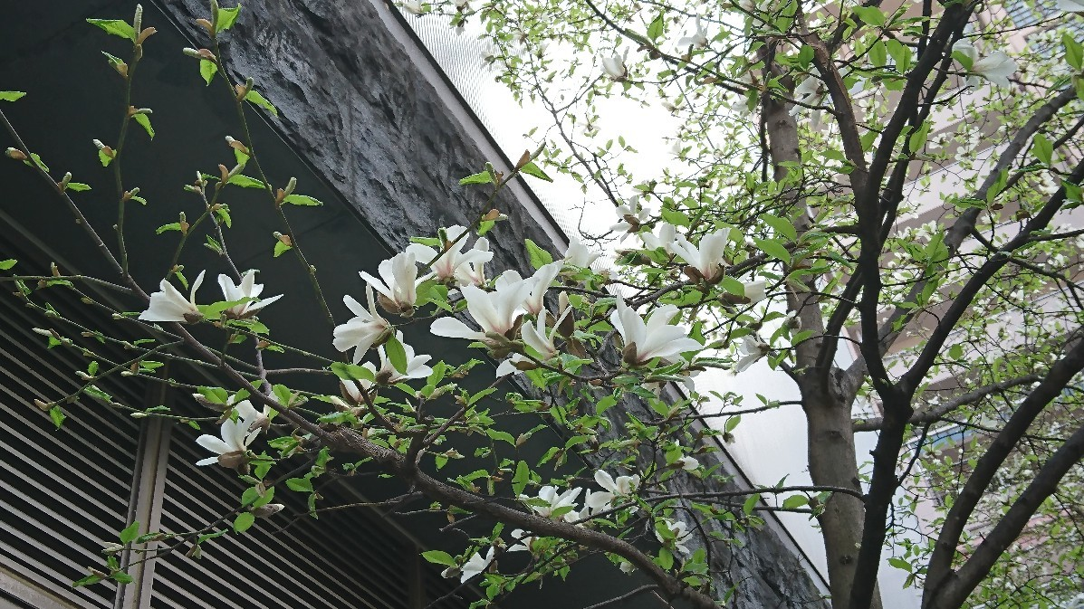 桜_e0124493_15164244.jpg