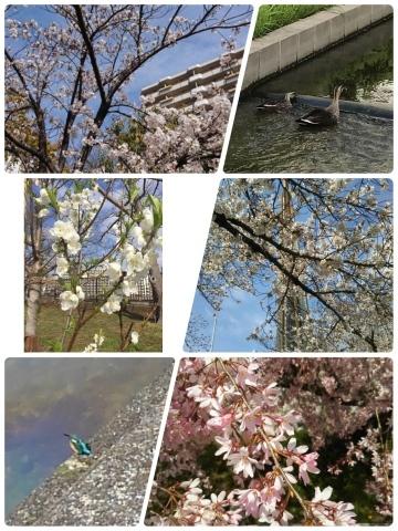 自然のなかで春を撮る_e0281793_23031677.jpg