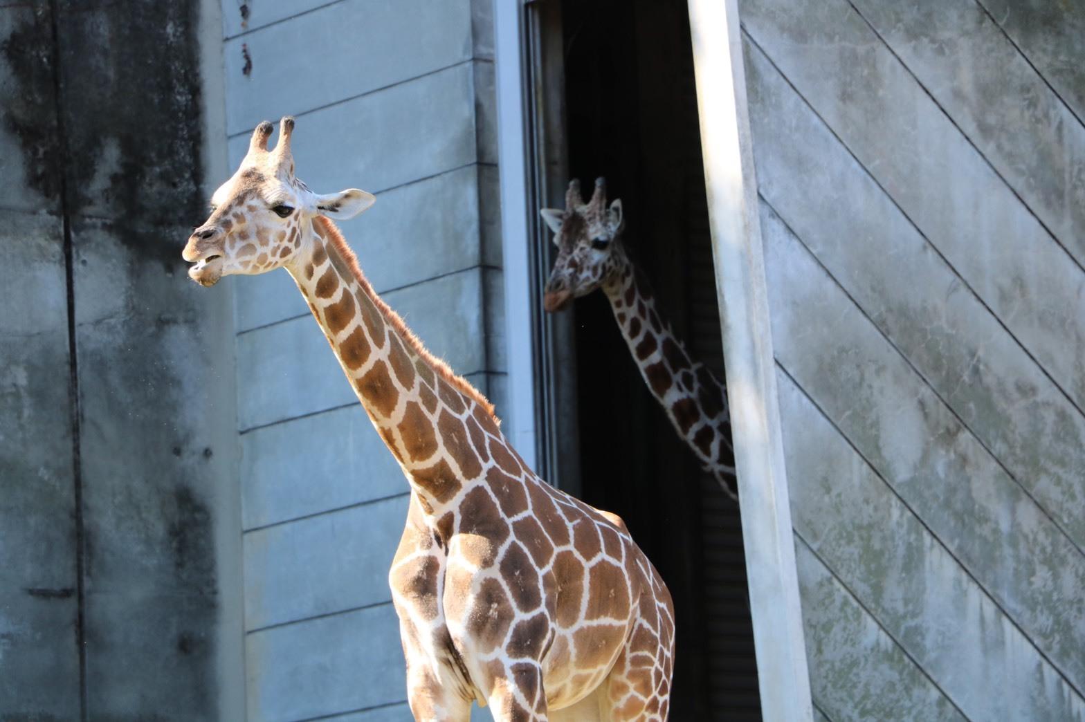 動物園_a0113003_12344941.jpg