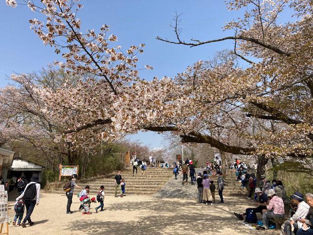 春の高尾山 2021_e0208519_09400905.jpg