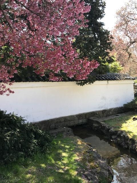 2021 フィラデルフィア桜便り_d0269832_02215075.jpeg