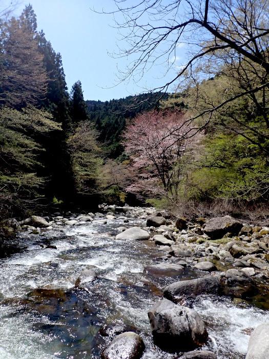 桜散る渓にて_c0120834_20300771.jpg