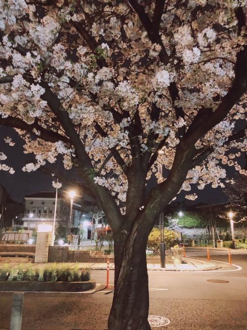 おうちでお花見_d0010742_18120984.jpg