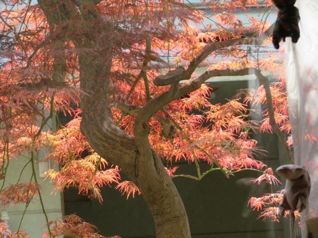 手向山(タムケヤマ)紅葉を活ける_f0329849_17503157.jpg