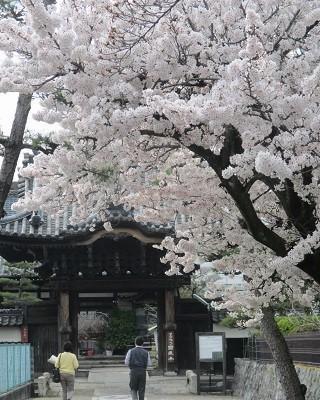 2021年の桜(2)_f0197754_17513100.jpg