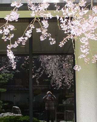 2021年の桜(2)_f0197754_17582739.jpg