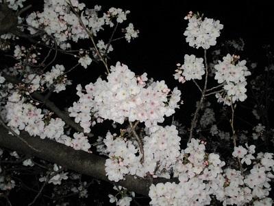 2021年の桜(2)_f0197754_18213345.jpg