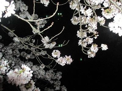 2021年の桜(2)_f0197754_18213929.jpg