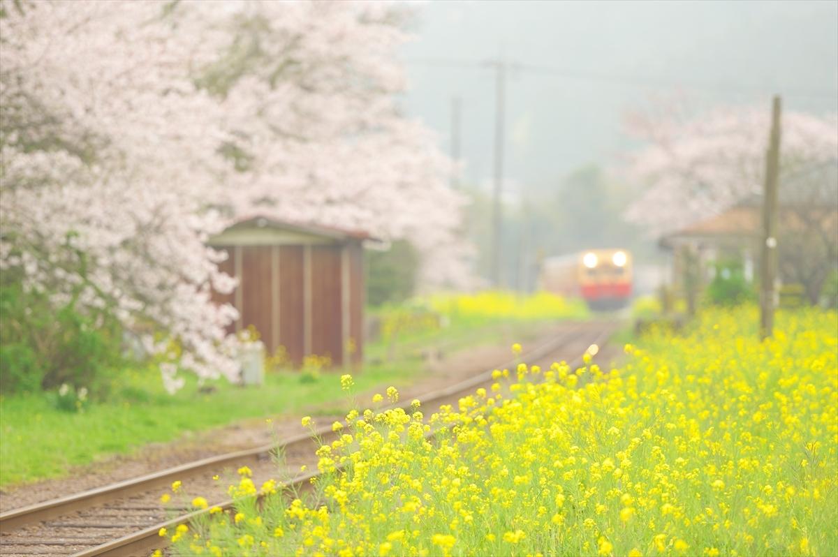 春うらら1 ~仲春の小湊鐡道~_f0018464_22125042.jpg
