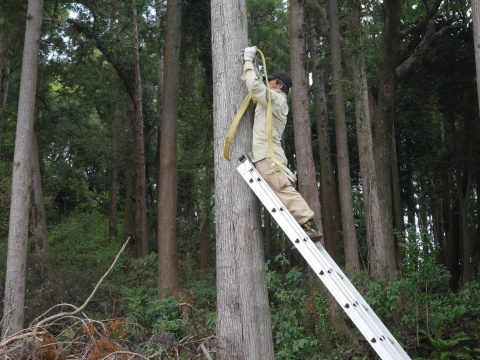 幹が空洞化した形状不良のスギ伐採4・4六国見山手入れ(下)_c0014967_17581110.jpg
