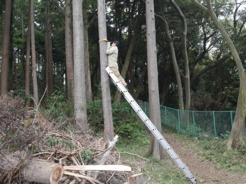 幹が空洞化した形状不良のスギ伐採4・4六国見山手入れ(下)_c0014967_17582240.jpg