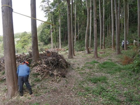 幹が空洞化した形状不良のスギ伐採4・4六国見山手入れ(下)_c0014967_17591395.jpg