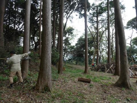 幹が空洞化した形状不良のスギ伐採4・4六国見山手入れ(下)_c0014967_17592940.jpg