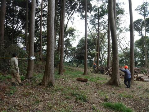 幹が空洞化した形状不良のスギ伐採4・4六国見山手入れ(下)_c0014967_17594432.jpg