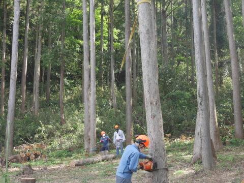幹が空洞化した形状不良のスギ伐採4・4六国見山手入れ(下)_c0014967_18010682.jpg