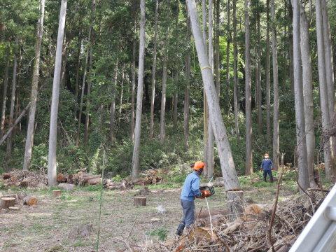 幹が空洞化した形状不良のスギ伐採4・4六国見山手入れ(下)_c0014967_18012298.jpg
