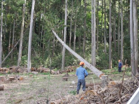 幹が空洞化した形状不良のスギ伐採4・4六国見山手入れ(下)_c0014967_18013397.jpg