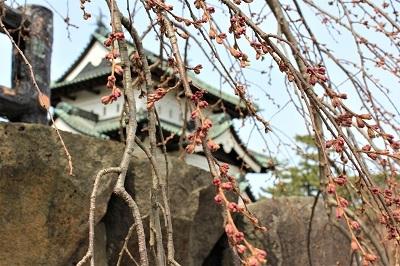 弘前公園で春探し_2021.04.02撮影_d0131668_16163717.jpg