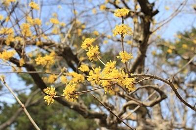 弘前公園で春探し_2021.04.02撮影_d0131668_17323800.jpg