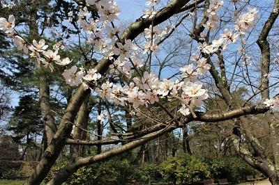 弘前公園で春探し_2021.04.02撮影_d0131668_17350280.jpg