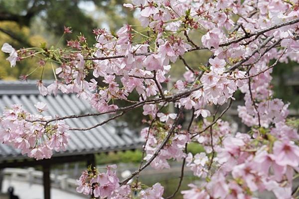 春の住吉大社_e0177271_20005430.jpg