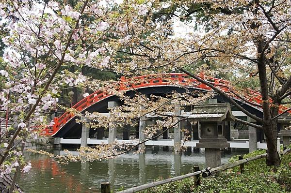 春の住吉大社_e0177271_20081689.jpg