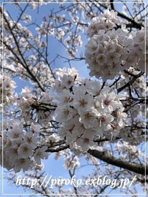お花見_b0010775_10103308.jpg