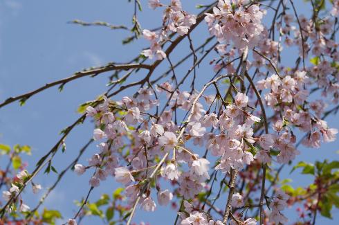 『春ららら市2021』にご来場、ありがとうございました。_e0356884_02495032.jpg