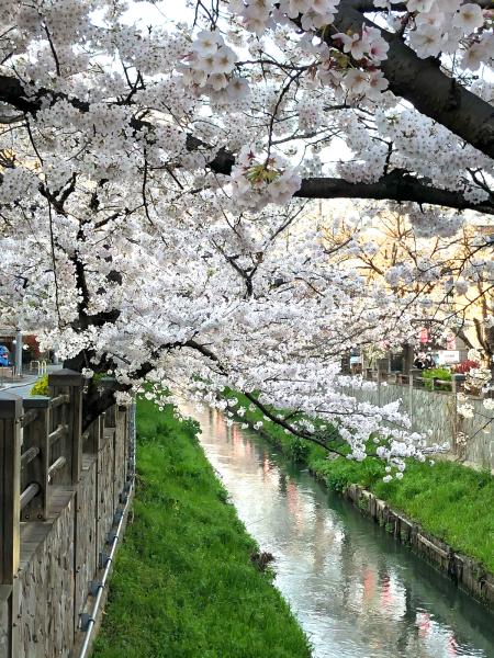 桜の季節が通り過ぎて_d0253887_22472831.jpg