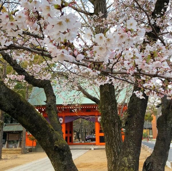桜の季節が通り過ぎて_d0253887_22473075.jpg