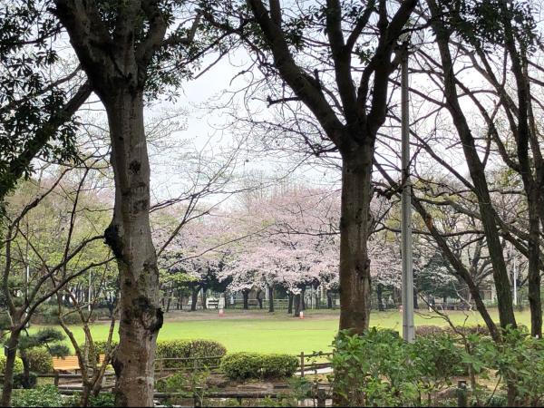 桜の季節が通り過ぎて_d0253887_22473229.jpg