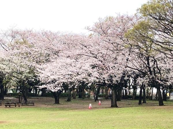 桜の季節が通り過ぎて_d0253887_22473480.jpg