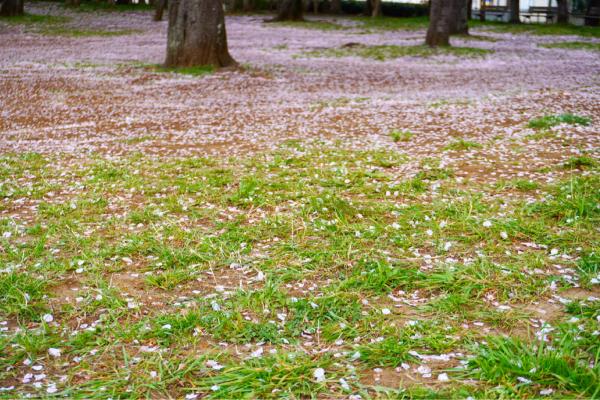 桜の季節が通り過ぎて_d0253887_22535474.jpg