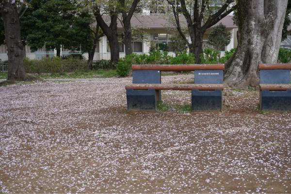 桜の季節が通り過ぎて_d0253887_22542408.jpg