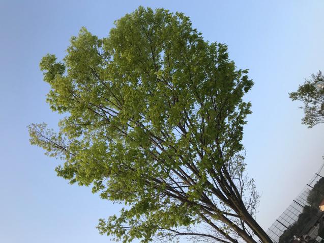 桜から新緑へ / yoshi_d0135801_21121501.jpg