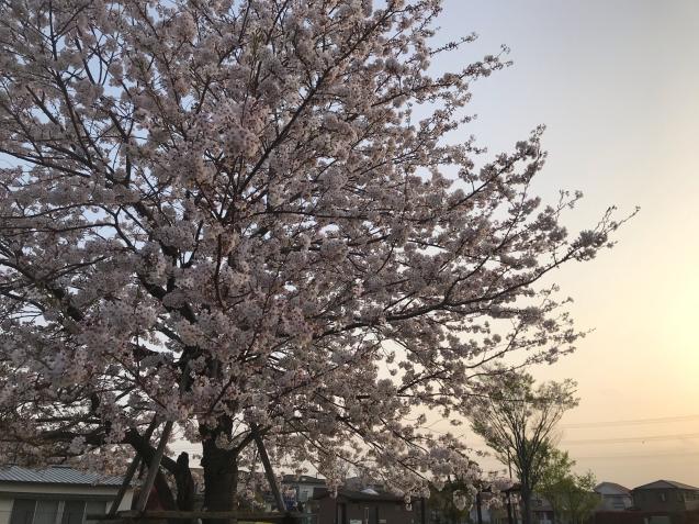 桜から新緑へ / yoshi_d0135801_21132857.jpg