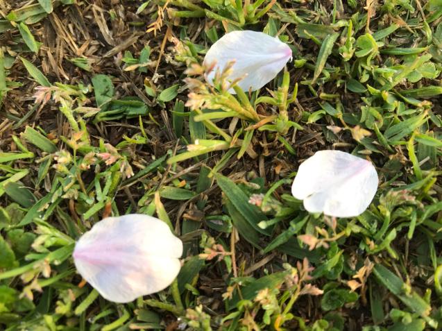 桜から新緑へ / yoshi_d0135801_21133266.jpg